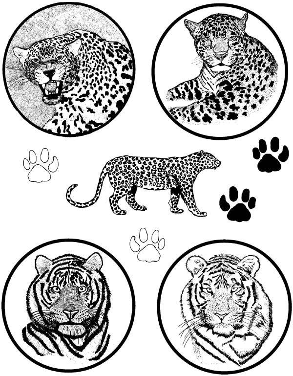 Big Cats Unmounted Rubber Stamp Sheet