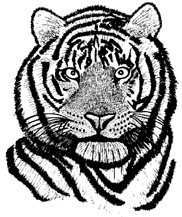 Bengal Tiger Unmounted Rubber Stamp