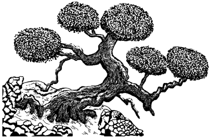 Bonsai Tree Unmounted Rubber Stamp