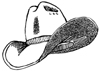 Cowboy Hat Unmounted Rubber Stamp