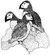 Puffins (Large) Wood Mounted Rubber Stamp