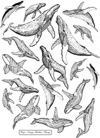 Whales Unmounted Rubber Stamp Sheet